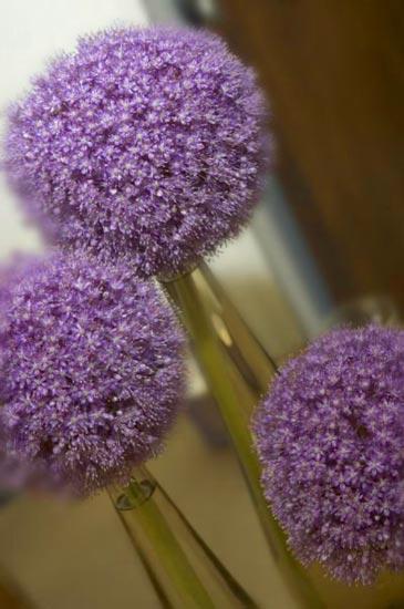 florals_11
